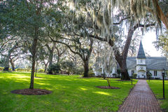 Spanish Moss in Heavenly Light Royalty Free Stock Photography
