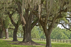 Spanish Moss Landscape Royalty Free Stock Images