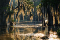 Spanish moss Stock Photography