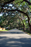 Spanish Moss on oak trees. Spanish Moss adorns the branches of majestic oak trees that line Magnolia Street in St Augustine, Florida, United States Stock Photos
