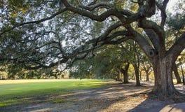 Spanish moss on oak trees in Savannah park Stock Image
