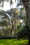 Spanish Moss Over Green Grass royalty free stock images