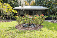 Spanish Moss Over Rose Garden Royalty Free Stock Images