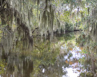 Spanish Moss and Painterly Reflections. Spanish moss hanging from Cypress trees in the swamps of Louisiana and colorful reflections in water Stock Image