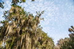 Spanish Moss and Sky Stock Images