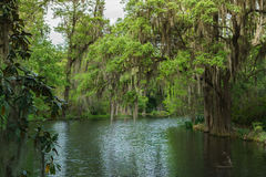 Spanish Moss Swamp. Moss hanging from trees in a swamp with water reflection during the daylight sky Stock Photography