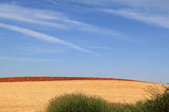 Spanish mowed and plowed fields in autumn Stock Image