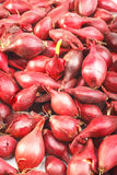 Spanish Onion set Stock Images