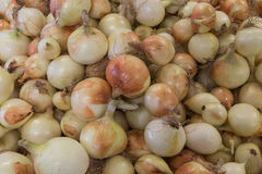Spanish Onions Stock Image