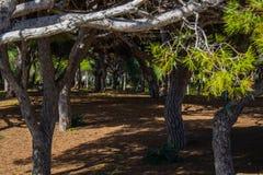 Spanish Park stock image