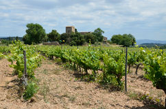 Spanish plantation of grapevines Royalty Free Stock Photos