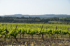 Spanish rural landscape with a grapevine plantation Stock Photo