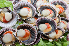 Spanish shells at the restaurant Royalty Free Stock Photo
