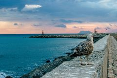 Gull. Spanish sunset landscape. Seagull in the port. Estepona, Malaga province, Andalusia, Spain Stock Image
