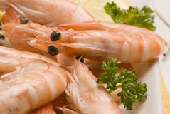Spanish tapas. Shrimps in salt. Gambas saladas. Royalty Free Stock Photography
