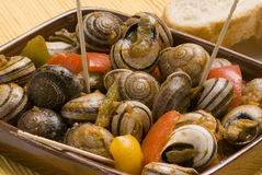 Spanish tapas. Snails in chili sauce. Stock Photos