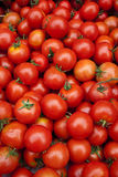 Spanish Tomatos Stock Photography