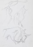Spanish toreador and bulls, pencil sketch Royalty Free Stock Image