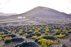Landscape in Tropical Volcanic Canary Islands Spain. Spanish View Vineyard Landscape in Lanzarote La Geria Tropical Volcanic Canary Islands Spain royalty free stock image
