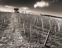 Spanish vineyard Royalty Free Stock Photo