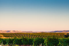 Spanish vineyard landscape Stock Photo