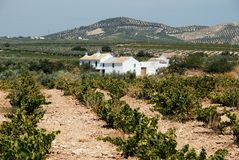 Spanish vineyard, Montilla. View across a Spanish vineyard with a farmhouse to the rear, Montilla, Cordoba Province, Andalusia, Spain, Western Europe stock photo