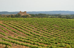 Spanish vineyards in Catalonia Royalty Free Stock Photos