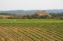 Spanish vineyards in Catalonia Stock Images