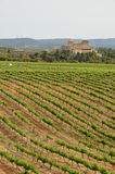 Spanish vineyards in Catalonia Royalty Free Stock Photo