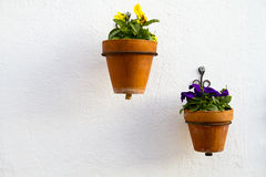 Spanish wall with beautiful plants. Stock Image
