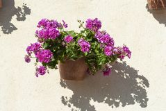 Spanish wall With flowers Andalusia. Spain Stock Images