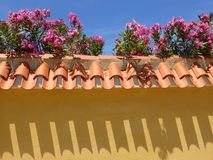 Spanish wall and Oleander flowers royalty free stock image