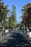 Spanje, Canarische Eilanden, Tenerife, Puerto de la Cruz royalty-vrije stock afbeeldingen