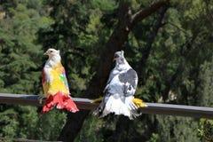spanje catalonië Barcelona Mooie gekleurde duiven in het park Royalty-vrije Stock Foto's