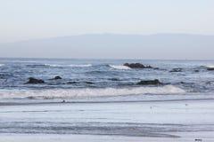 Spanjoren skäller stranden i Pebble Beach område, 17 mil drev, Kalifornien, USA Arkivbild