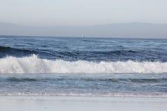 Spanjoren skäller stranden i Pebble Beach område, 17 mil drev, Kalifornien, USA Royaltyfri Foto