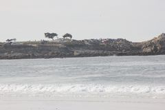Spanjoren skäller stranden i Stillahavs- fjärd för Pebble Beach område i avståndet, 17 mil drev, Kalifornien, USA Royaltyfri Fotografi