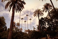 Spanjorträdgård med palmträdet Royaltyfri Foto