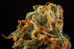 Spanning van de de barstmarihuana van de cannabisknop de macro groene met zichtbaar h Royalty-vrije Stock Fotografie