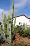 Spansk beskickning med kaktuns Royaltyfri Bild