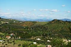 Spansk bygd med olivgröna dungar, Alozaina royaltyfri fotografi