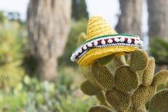 Spansk kaktus med hatten Fotografering för Bildbyråer