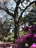 Spansk mossa i Forsyth parkerar i Savannah Georgia Royaltyfri Fotografi