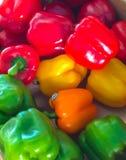 spansk peppar Fotografering för Bildbyråer