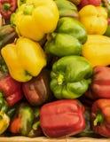 spansk peppar Royaltyfria Bilder