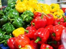 Spansk peppar Capcicum för söt peppar Royaltyfria Bilder