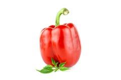 Spansk peppar eller paprika, söt peppar Arkivbild