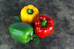 Spansk peppar eller paprika, söt peppar Royaltyfria Bilder