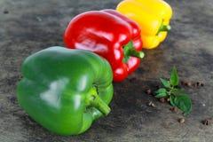 Spansk peppar eller paprika, söt peppar Royaltyfri Fotografi