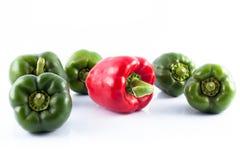 spansk pepparred Arkivbild